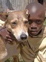 Nairobi_dog